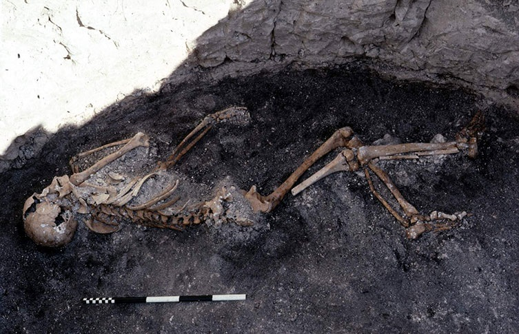 One of the few complete Iron Age skeletons found at the Danebury site. The remains of at least 300 individuals have been found, but no more than 40 have been complete skeletons